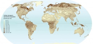 global-carbon-storage_Ruesch-and-Gibbs-2008