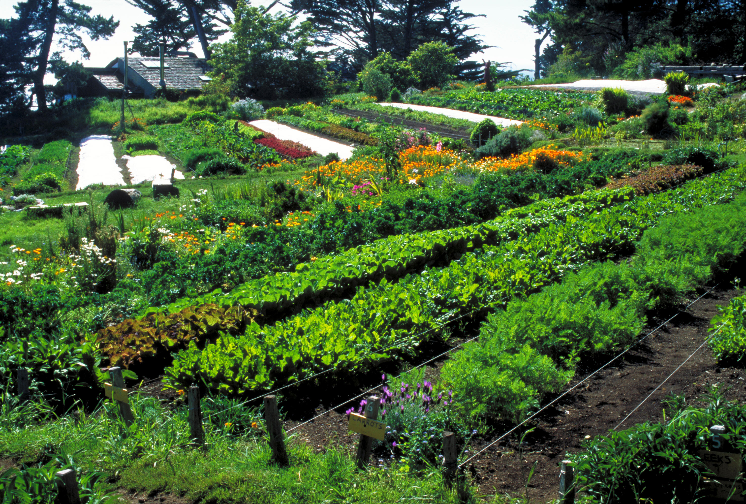 catholics in action teaching permaculture the global catholic